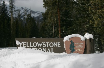 Yellowstone National Park & Reading Challenge Update