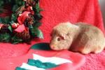 Colman at Christmas