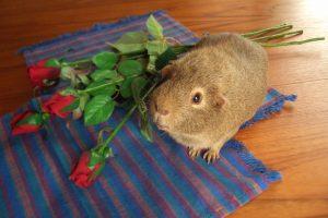 colman valentines roses