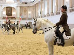 tarining at the Spanish Riding School