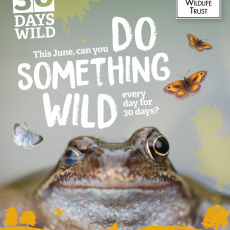 June starts with housekeeping #30DaysWild