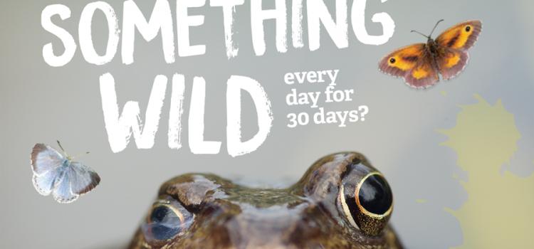 Do Something Wild