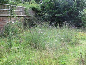 wildflower garden late summer