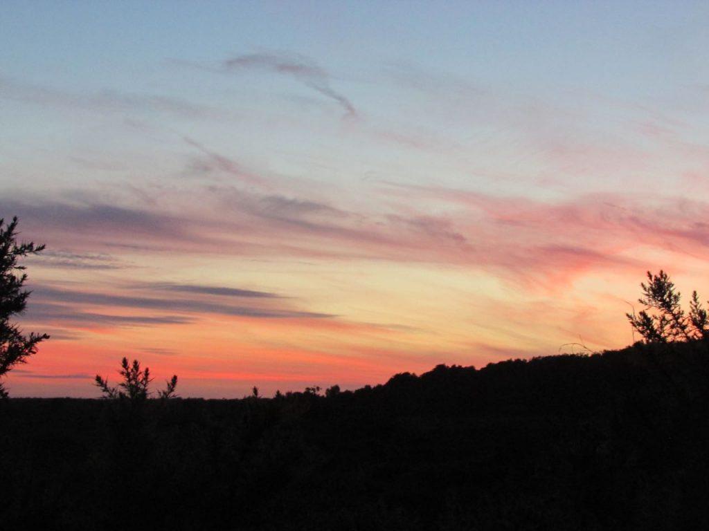 buxton heath nightjar