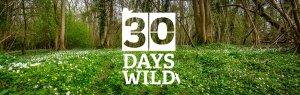 30dayswild wood