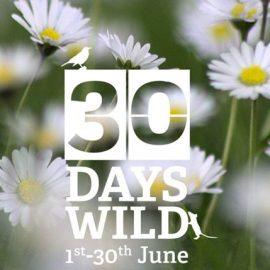 #30DaysWild – My wildness round-up and Pottery Bird