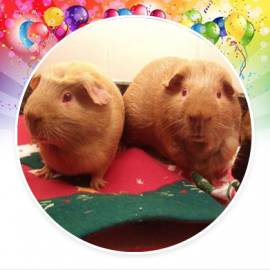 George's Guinea Pig World blog is ten years old