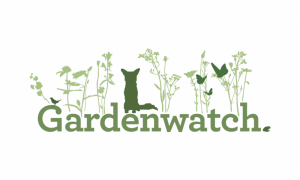 gardenwatch bird detective
