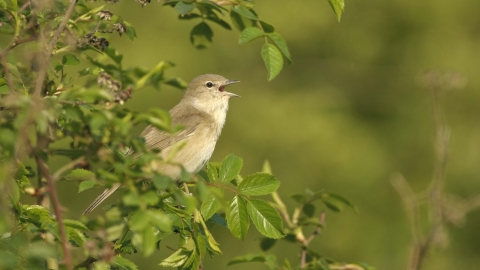 Birds in a Bush | Random Act of Wildness #30DaysWild