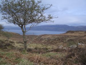 Ulva towards Treshnish