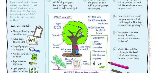 tree survey NWT