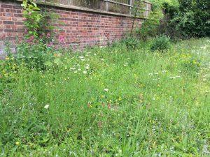 wildflower garden 2018