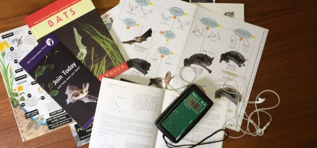 bat detector and field guides