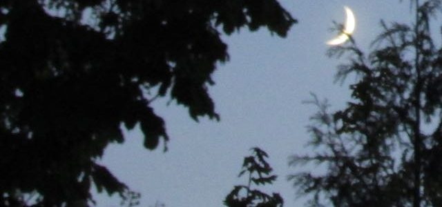 darkness and moon through trees