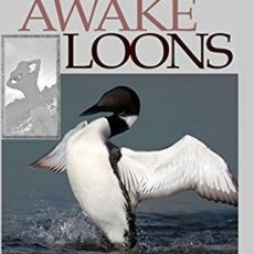Book Review   The Wide Awake Loons