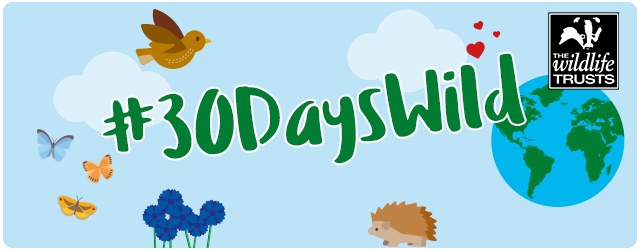 30dayswild